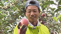 テレメンタリー2020「信州リンゴ また色づくまで~台風被害農家の決意~」