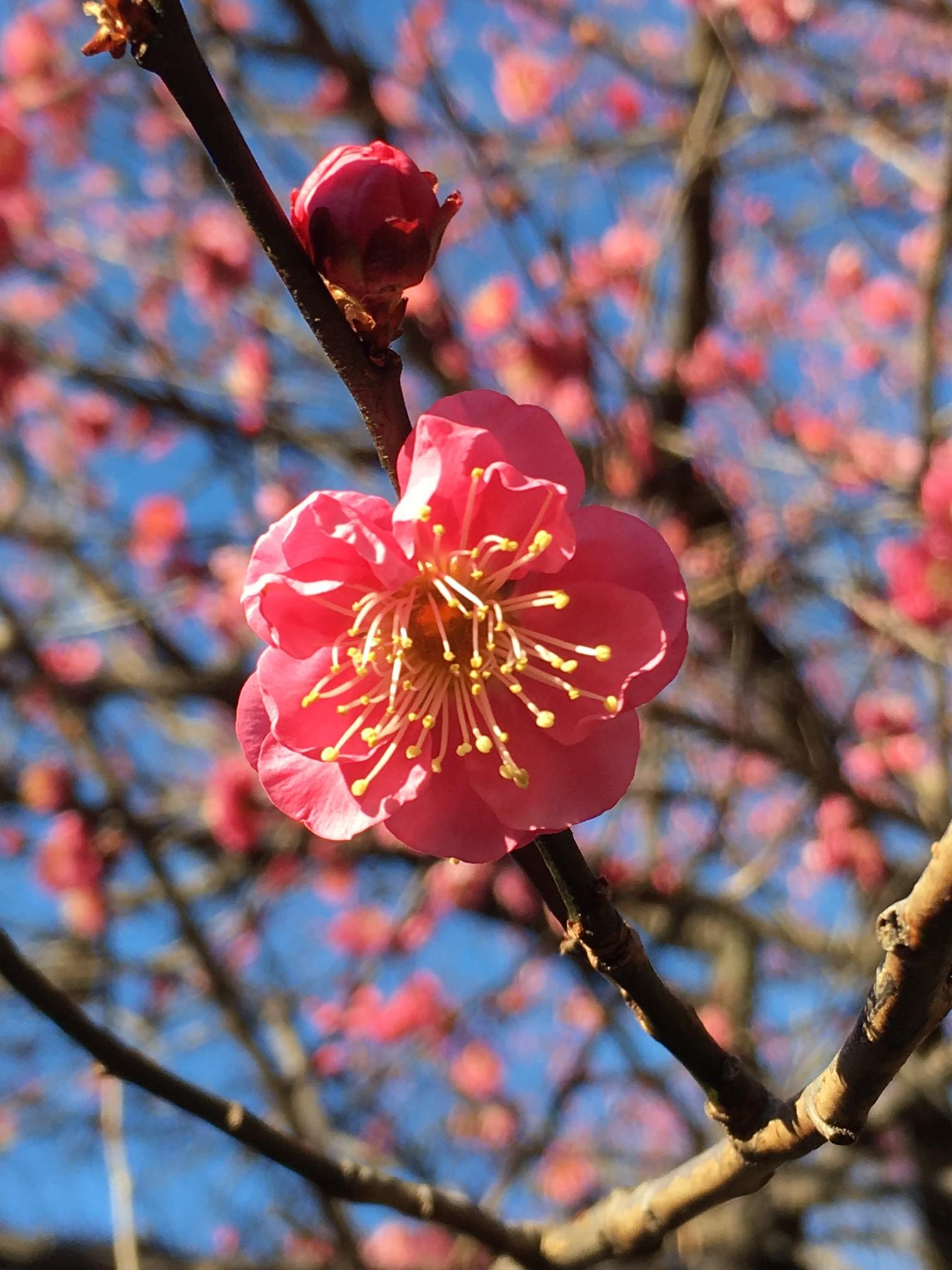 季節外れの春の花