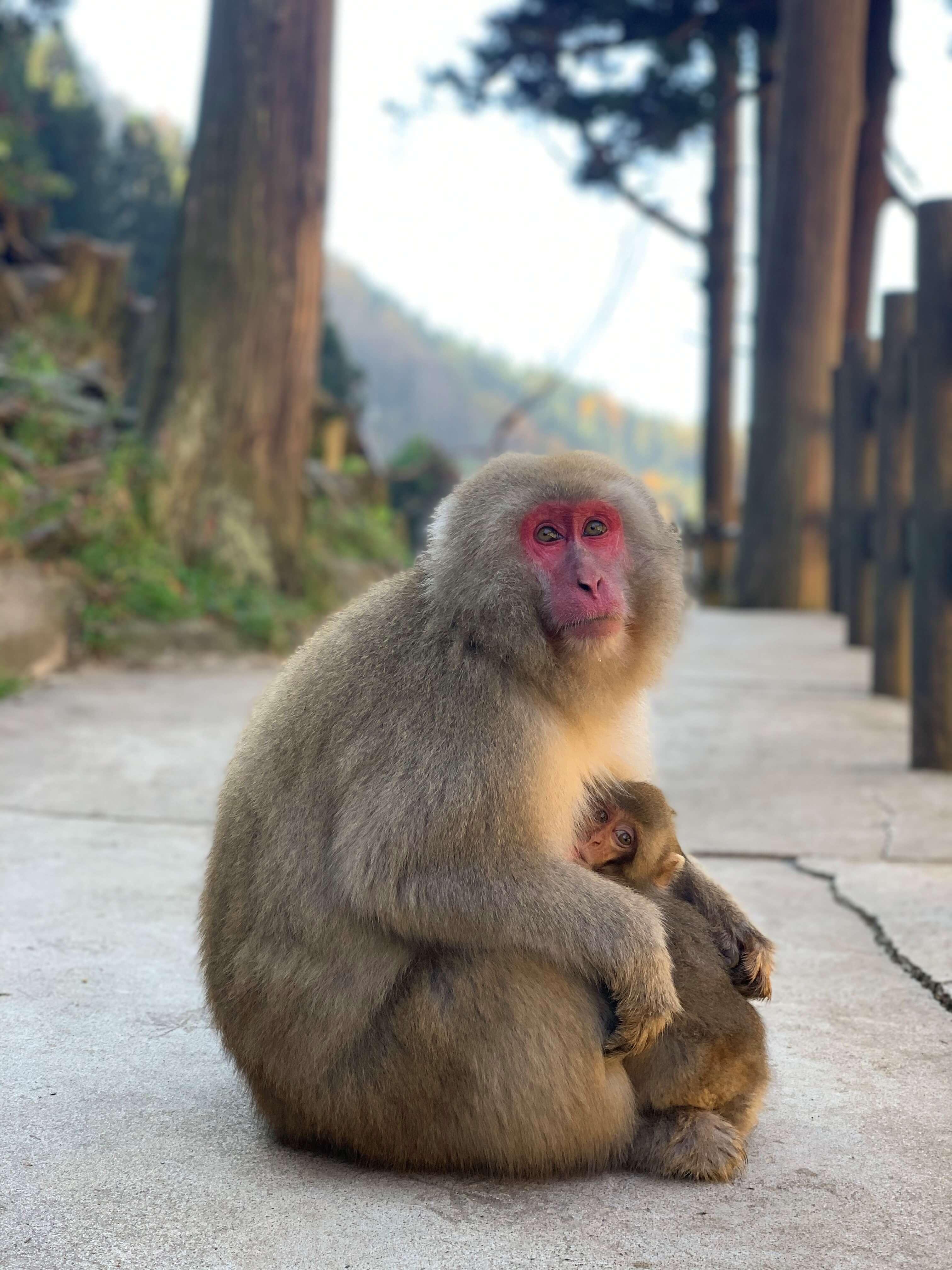 「猿はバナナ好き・・・」はウソ?(楠原)