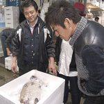 特急あずさで行く!豊洲&築地ツアー ~ニッポンの新旧台所はイマ?~(3月16日 土曜 あさ9時30分)