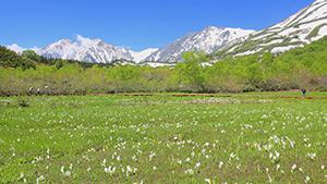 もっと!信州77「小谷村編」|雪解けの栂池自然園