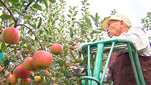 須坂市リンゴ農家|がんばろう信州!~復興生活再建へ向けて~