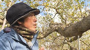 被災したリンゴ畑|復興へ一歩一歩 アップルラインのいまを見つめて