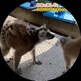 お家で楽しむ須坂市動物園2