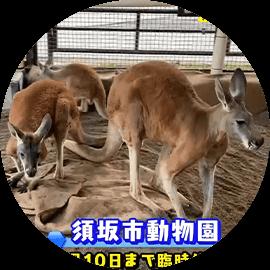 人気カンガルー家族に赤ちゃん仲間入り・お家で楽しむ須坂市動物園