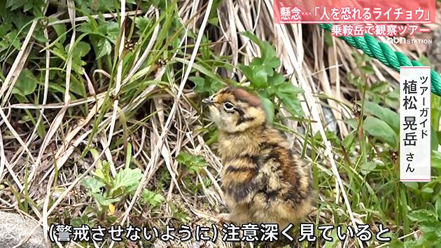 ライチョウ観察ガイドツアーin乗鞍(abnステーション2021年7月14日 特集)