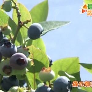 未来農業計画 [森の畑](須坂市)