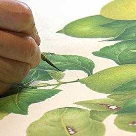 野村陽子植物細密画館開館10周年記念「花は自然に生きている」(2019年9月28日 土曜 午後3時30分)
