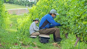 ワイン用ブドウ栽培農家 abn・八十二ふるさとCM大賞NAGANO 第20回記念 ゆるいなか信州池田町