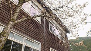 猫とおじいさんと木造校舎(いいね!信州スゴヂカラ)