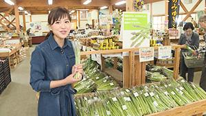 今が旬!飯山のアスパラガス(いいね!信州スゴヂカラ)| 花の駅・千曲川