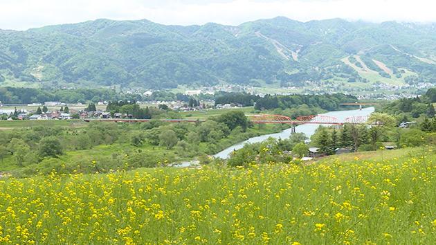 今が旬!飯山のアスパラガス(いいね!信州スゴヂカラ)