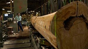 木曽・森の小さな鉄道と巨木たち(いいね!信州スゴヂカラ)| 赤沢自然休養林