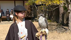 信州の鷹狩りのルーツを探る