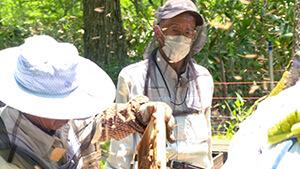 養蜂業 信州はちみつ王国を探る
