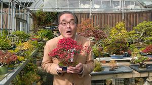 松坂彰久アナウンサー|日本で唯一の女性盆栽技能保持者