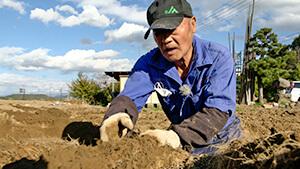 松代町ナガイモ生産|長野市松代町のナガイモ