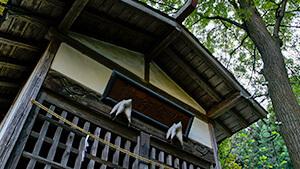 会津比売神社|長野市松代町のナガイモ