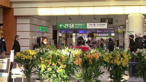 JR長野駅東西自由通路・信州産 花々の展示|日本一だ!信州の花づくり