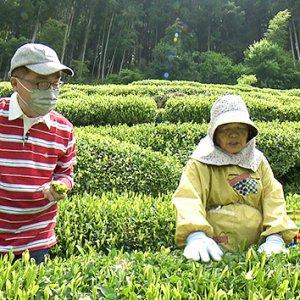 天龍村の中井侍銘茶を探る(6月12日 土曜 午前10時45分)