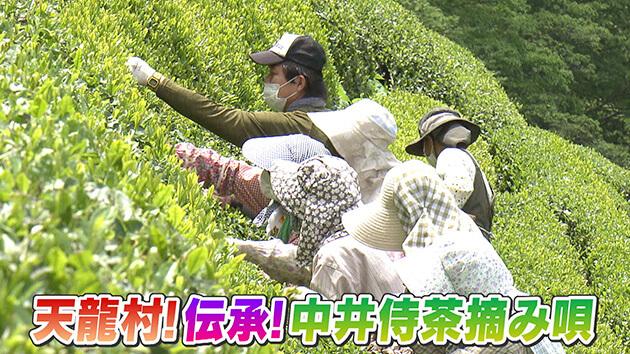天龍村!伝承!中井侍茶摘み唄 / 天龍村の中井侍銘茶を探る