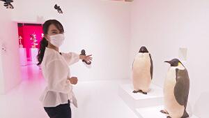 コウテイペンギン・大曽根俊輔|街中が芸術館 ~松本まちなかアートプロジェクト~