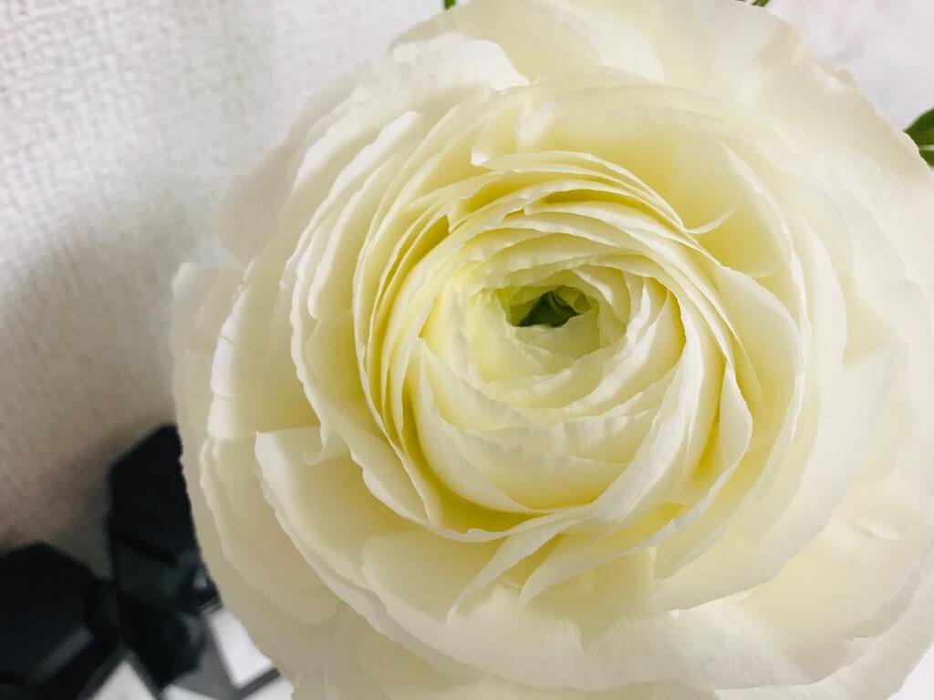 自宅でお花見