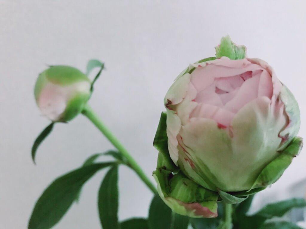 植物に起こされる朝(萩原)