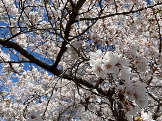 萩原・春の意気込み