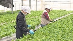 炭平コーポレーション べジドリーム|信州の百年企業