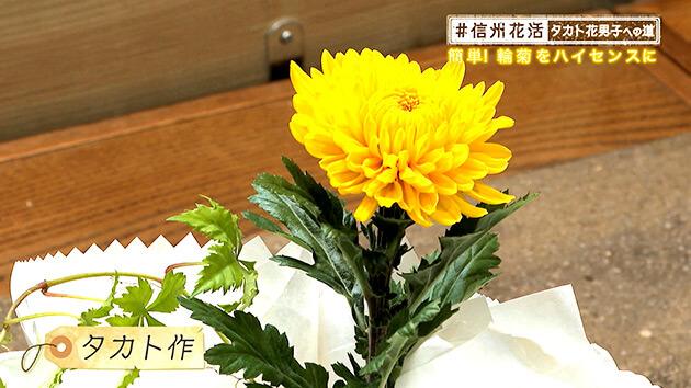 輪菊の装い・タカト花男子への道(2020年8月28日 金曜 よる6時55分)
