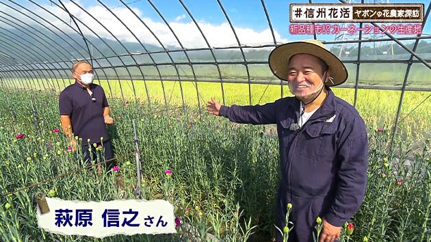 新品種も!?カーネーションの生産地・ヤポンの花農家探訪(2020年9月18日 金曜 よる6時55分)
