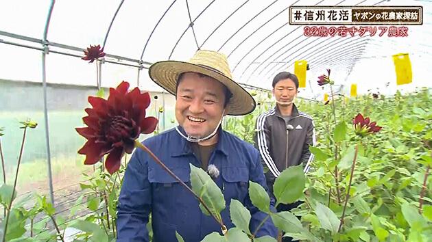 32歳の若きダリア農家(#信州花活 ~ヤポンの花農家探訪~ / 2020年11月13日)