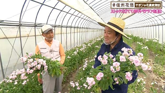 ストックを育てて40年!ベテラン花農家(#信州花活 ~ヤポンの花農家探訪~ / 2020年11月20日)