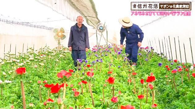 アネモネを育てて20年!ベテラン農家(#信州花活 ~ヤポンの花農家探訪~ / 2021年1月22日)