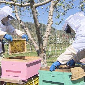 信州はちみつワールド!abn屋上で養蜂に挑戦!(5月15日 土曜 あさ9時30分)