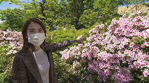 ミツバチは自然環境に役立つ